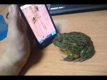 Pacman Frog catch some touch screen bugs.
