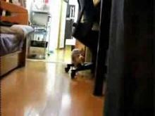 Kill Bill Ninja cat comes closer while not moving!